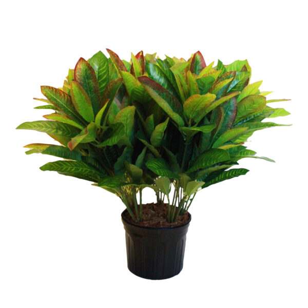 Red-Tipped Aglaonema Plant