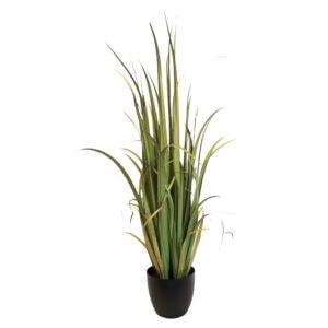 Green Gladiolus Grass