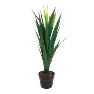 Green Yucca Plant