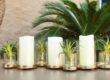 Fresh and New Centerpiece Ideas For Your Organic Contemporary Home