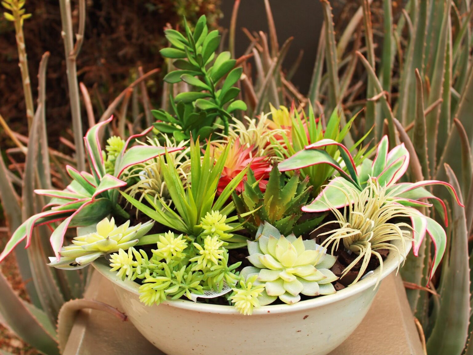 10 Super Fun Ways to Display Succulents In Your Contemporary Home!