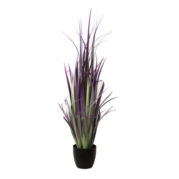 Purple and Green Gladiolus Grass