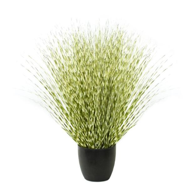Zebra River Grass
